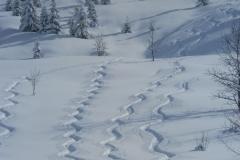 trace de ski